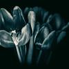 20141229 Flowers in the Dark