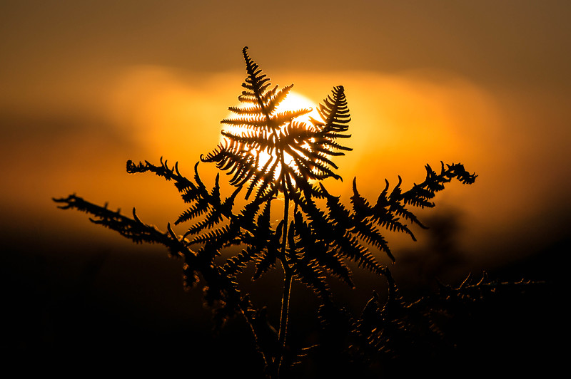 20150823 Sunset Bracken