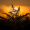 20150823 Sunset Bracken