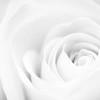 20150720 Soft Petals