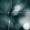 20150916 Web Lines