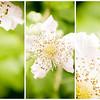 20150623 Flower