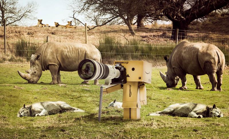 20150327 On Safari