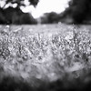 20150814 Raindrops in the Grass