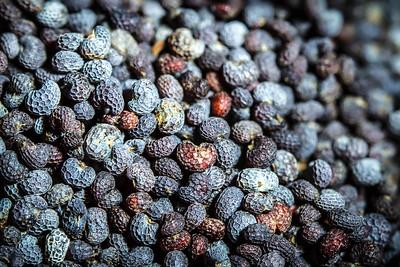 20160118 Poppy Seeds
