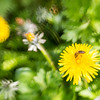 20160506 Lensbaby Bee