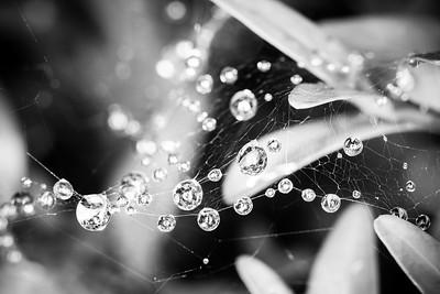 20180912 - Rain on a Web