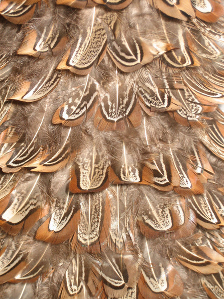 FEBRUARY 11, 2007<br /> <br /> A close up of the feather tree on our piano.