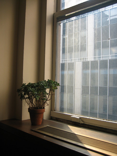 JULY 27, 2006<br /> <br /> Ah.  My new office WITH A WINDOW. It's amazing what a little sunlight can do for your day.  I bought my first plant today for my windowsill.  A desert rose cactus.  Now there are a lot more plants, but she was the first.