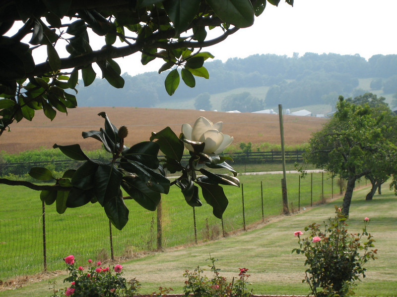 JUNE 17, 2006<br /> <br /> The day of the wedding.  Unfortunately my camera's battery died moments before the bride walked down the aisle.  But I did get this gorgeous picture of the magnolia tree and rolling hills.