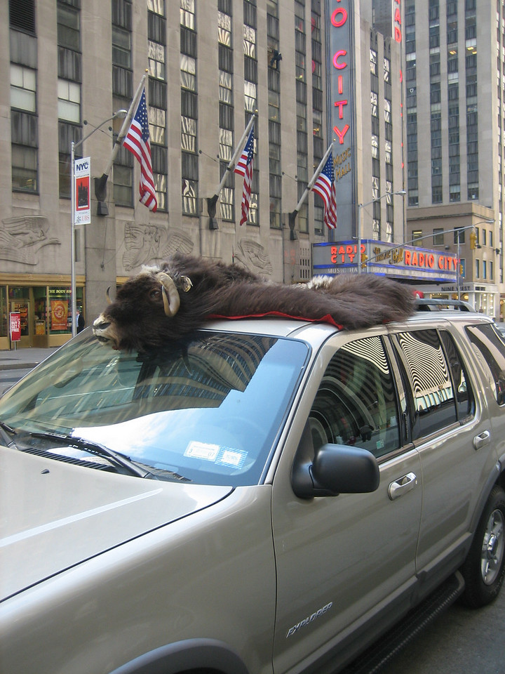 MARCH 27, 2006<br /> <br /> Ok, I have to admit, this was taken a day later because I forgot to take a picture the first day I was back from the trip! <br /> <br /> This car was parked outside of Radio City at when I first got to work.  Hysterical.  There is a buffalo head and skin on top of an SUV.  Welcome to New York.