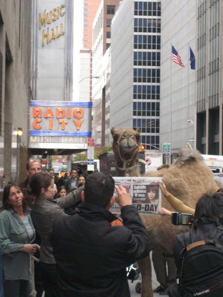 NOVEMBER 7, 2006<br /> <br /> The Animal Load-in.  Here is Azuri...our camel at her media event.  The press had her read the post while taking her picture.  Ah the press...