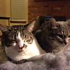 Sharing the purr pad