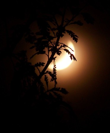 Favorite Moon Picture