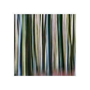 Tree Lines II