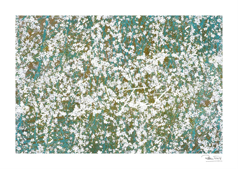 Blossoms & Textures
