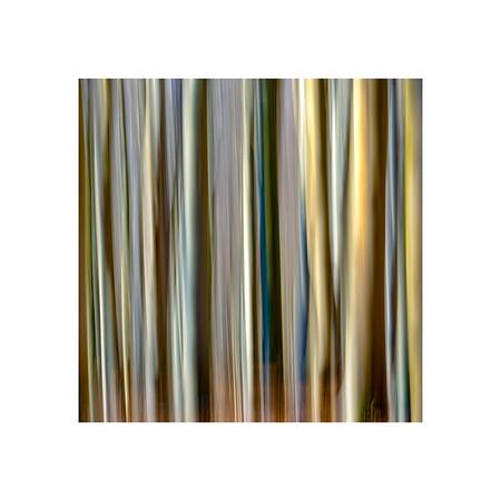 Tree Lines I