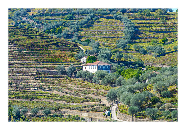 Colours Of The Douro I