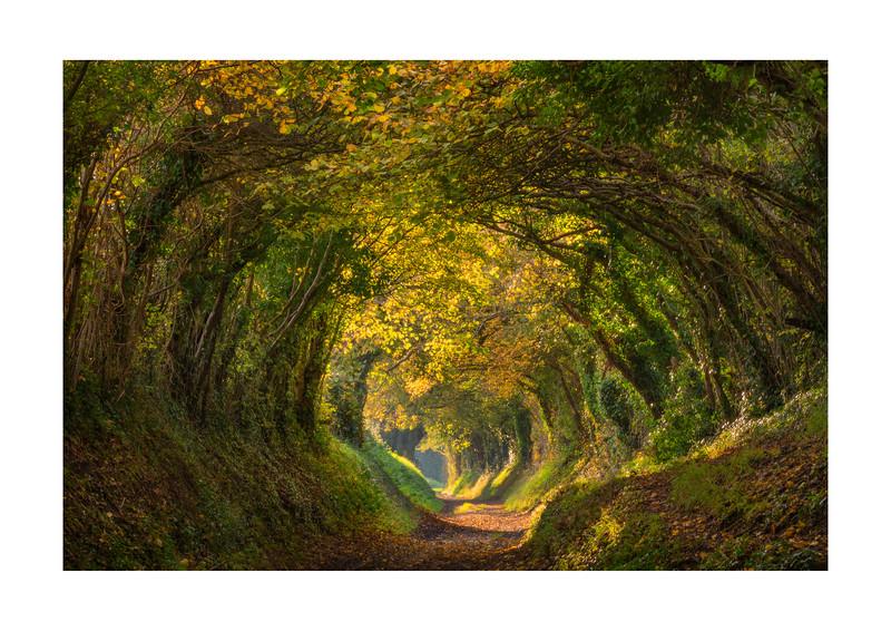 Leafy Tunnel