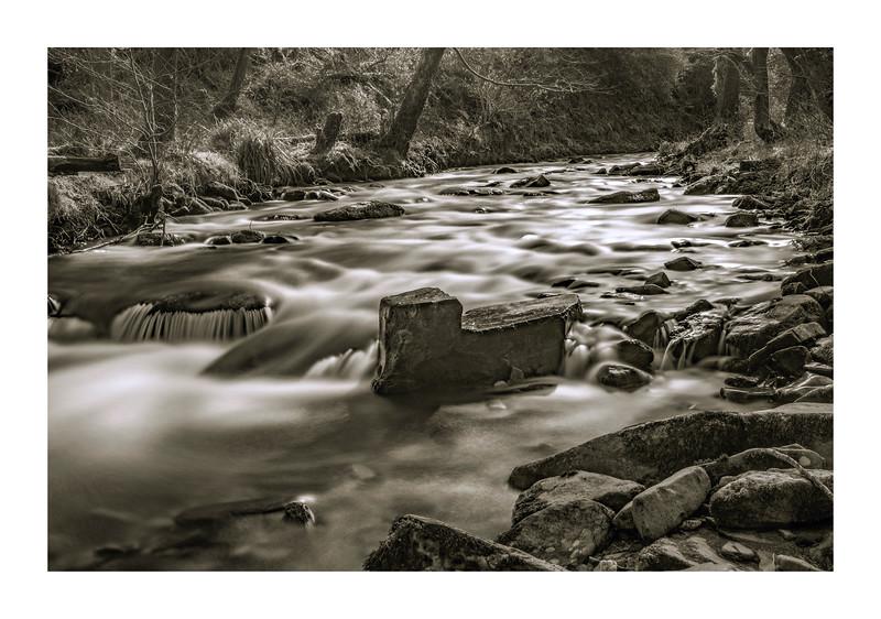 Stalwart In The Stream