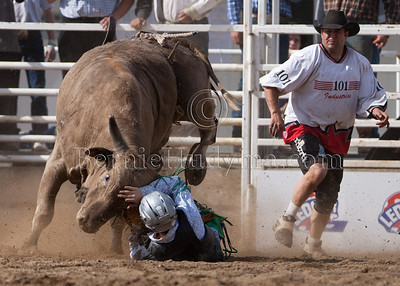 Young Bull Rider Trying To Hold Back That Angry Bull _M335445
