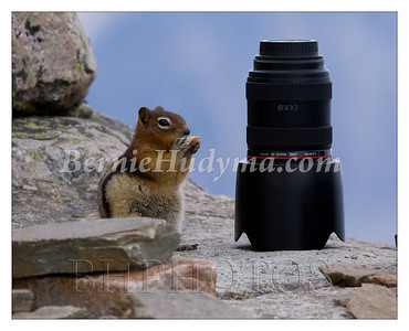 _A021976  Little ground squirrel having a snack beside my Canon 24x70 lens