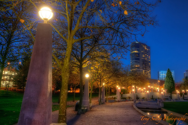 319 Night Park - Bellevue
