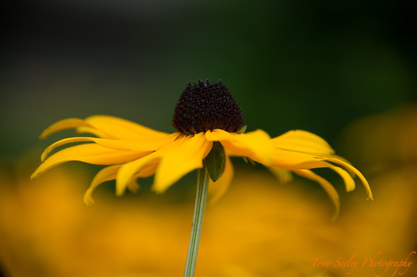 236 Flower - Redmond