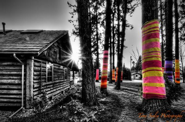 080 Tree Socks 2 - Redmond