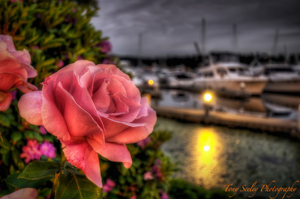 167 Rose - Carillon Point