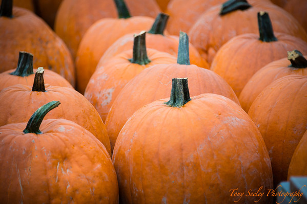 288 Pumpins - Redmond