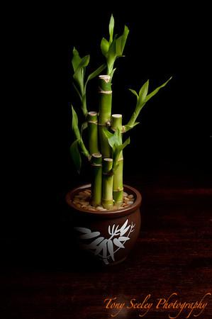 052 Bamboo - Home