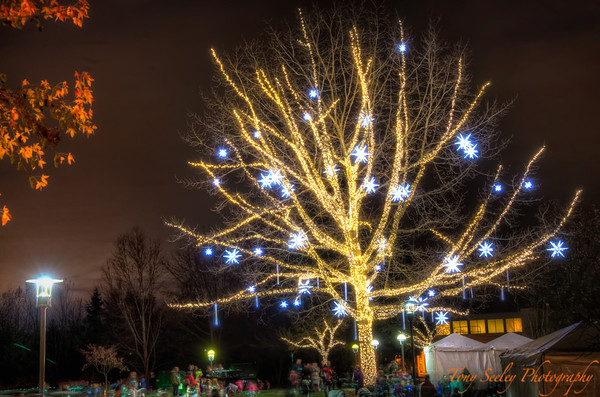 339 Tree Lights - Redmond