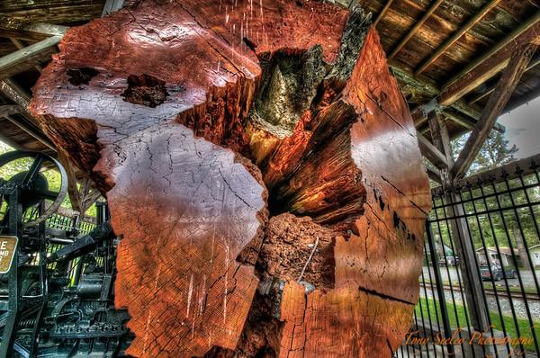 157 Western Red Cedar Log - Snoqualmie