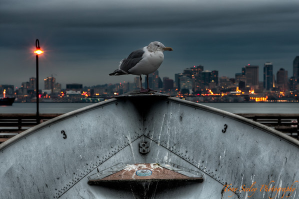 029 Seagull - Alki Seattle