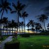 197 Palm Trees - Maui
