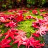 308 Leaves - Seattle