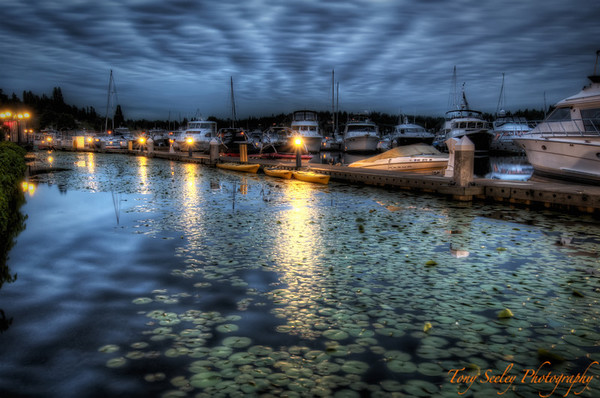 177 Harbor Water Lillies - Kirkland