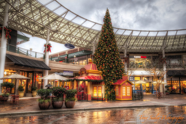 322 Town Center Tree - Redmond