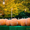 287 Pumpkin Shopping - Redmond