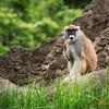 183 Monkey - Woodland Park Zoo