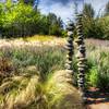 247 Stones - Bellevue Botanical Gardens