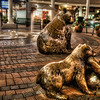 160 Bears - Redmond