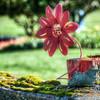 099 Roozengaarde Fence - Mount Vernon