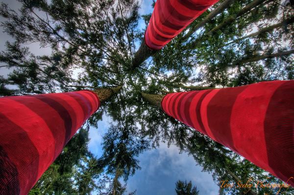 073 Tree Socks - Redmond