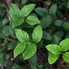043 Leaves - Redmond Watershed
