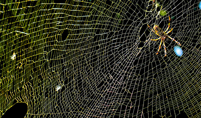 Web caught in the sunset shows off its intricate construction.