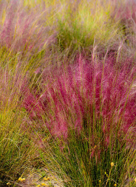 I love this grass.