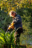 What do you do with a blurry picture where you like the subject and you like the light? Photoshop it into a painterly  image. Beautiful late afternoon sun and a wonderful day for moving leaves around.  Joe does it well, picking up pecans along the way of course.