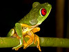 What, You don't believe it? She IS working on her Costa Rica photo album. Really. Lots of pics of frogs and bugs. Stay tuned.